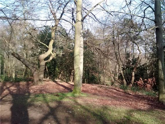 Bostall Heath And Woods