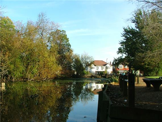 Bushy Mead