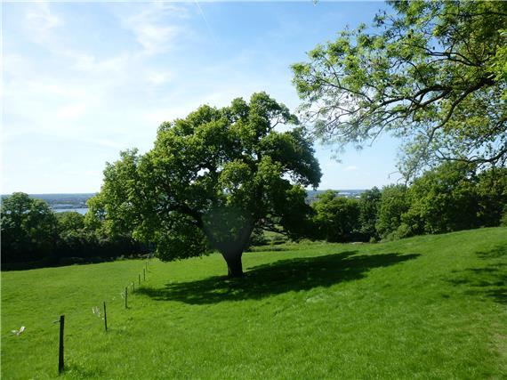 Sewardstonebury