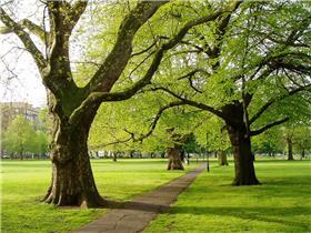 Clapham Park