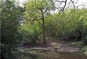 Lesnes Woods